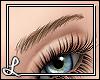 L| Bistre Eyebrows