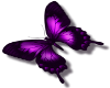 {L} purple butterfly med