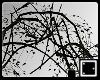 ♠ Vine Arch