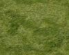 [ARIE] grass
