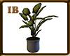 [7v7] Plant