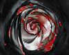 BleedingRose Black/Red