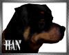[H]Rottweiler *Anim