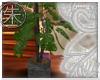 }T{ Scindapsus tree
