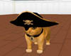A&N PIRATE CAT
