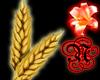 -N- Mechi wheat wand
