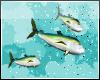 *Request- Swimming Tuna