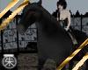 }T{Black Stallion