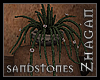 [Z] Sandstones Huernia