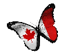 Canada Flag Butterfly