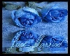 Just Married *Blue*