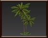 [8V6] Coconut tree