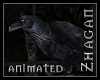 [Z] AR Raven animated