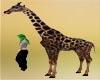 Giraffe Girafa Pet