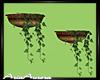 Derivable Hanging Plant
