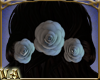 VA ~ 3 Silver Back Roses