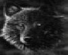 (PuP) Alpha Wolf