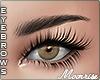 ❣ Xee brows2 black