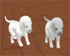 ~White Wolf pups (A)