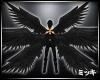 ! Tripe Black Wings #Ani