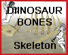 Dinosaur Bones Skeleton