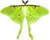 Amazing Moths #1