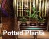 [BD] PottedPlants