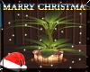 (LR)::Christmas::Plant 2