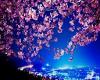 Sakuras Ball Tail