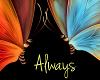 [KC]Always butterflies