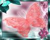 butterfly cozy rose