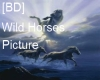 [BD] Wild Horses Picture