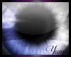 Y~|e| Eclipse
