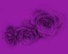 Transparent Grey Roses