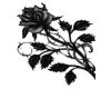 [ML] black rose