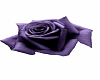 Purple rose dance marker