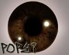 Male Dark Brown Eye's