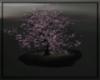 S.S TREE OF WONDERS