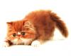 *Chee: Kitten 7
