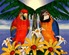 Macaw's Animated