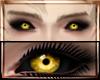 Genos Yellow Eyes M/F