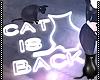 [CS] Cat is Back Neon