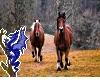 Horses Backdrop