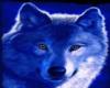 Frameless Blue Wolf pic