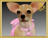 Chic Chihuahua