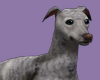 EDEN BluBrin Greyhound