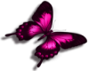 pink butterfly L