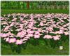 Pink Flower#1