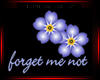 FORGET ME  NOT W/FLOWERS