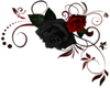 Red/Black Roses- TR